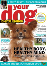 Abonnement op het blad Your Dog magazine